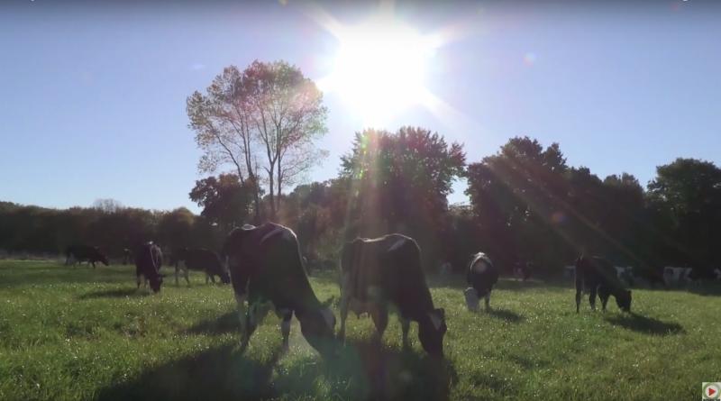 Bretagne Télé: L'eleveur de Mael-Carhaix et ses Vaches