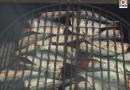 QUIBERON: Fete de la Sardine