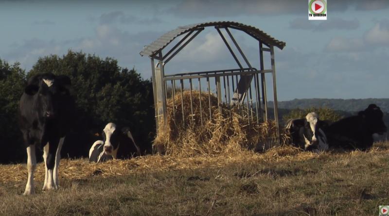 Guenroc: Les Vaches craquantes - Bretagne Télé