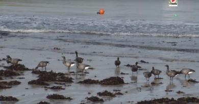 Portivy: Le resto des Oiseaux - TV Quiberon 24:7