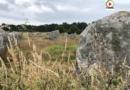 Menhirs et Végétation - Carnac Télé