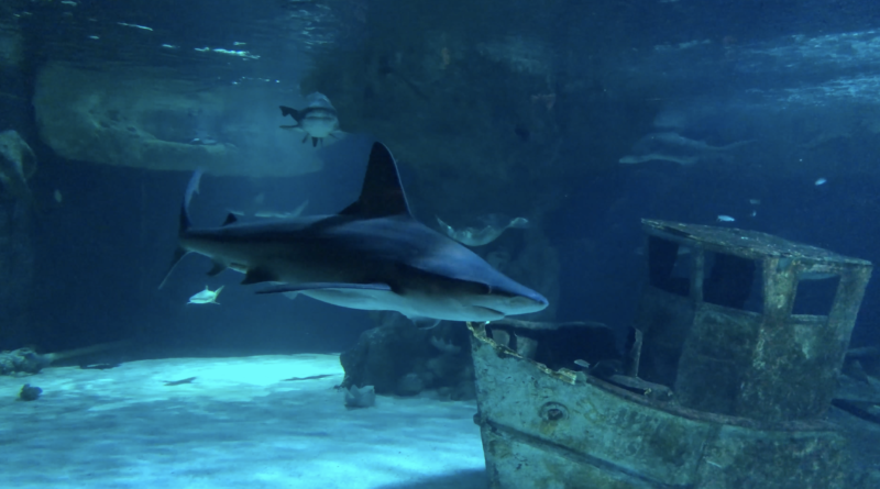 Requins de l''Océarium du Croisic - Télé La Baule