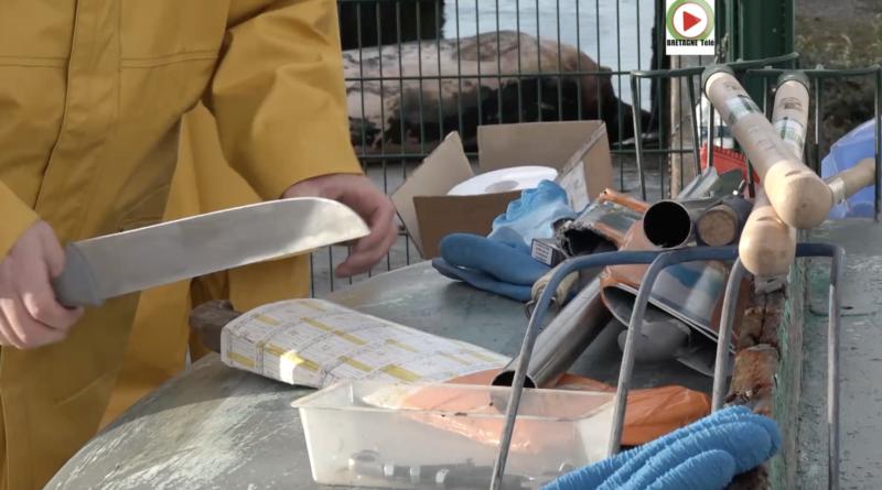 Lorient | Découpe d'un Rorqual échoué - Bretagne Télé