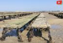 Carnac   Huîtres et bateaux anse du Pô - Bretagne Télé