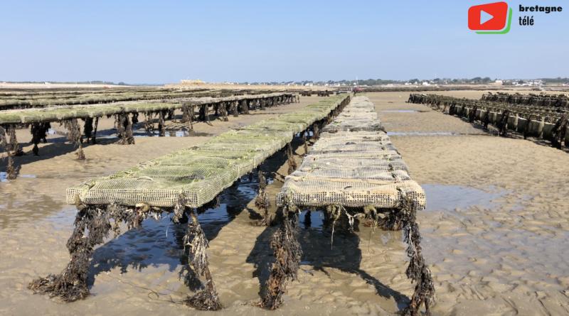 Carnac | Huîtres et bateaux anse du Pô - Bretagne Télé